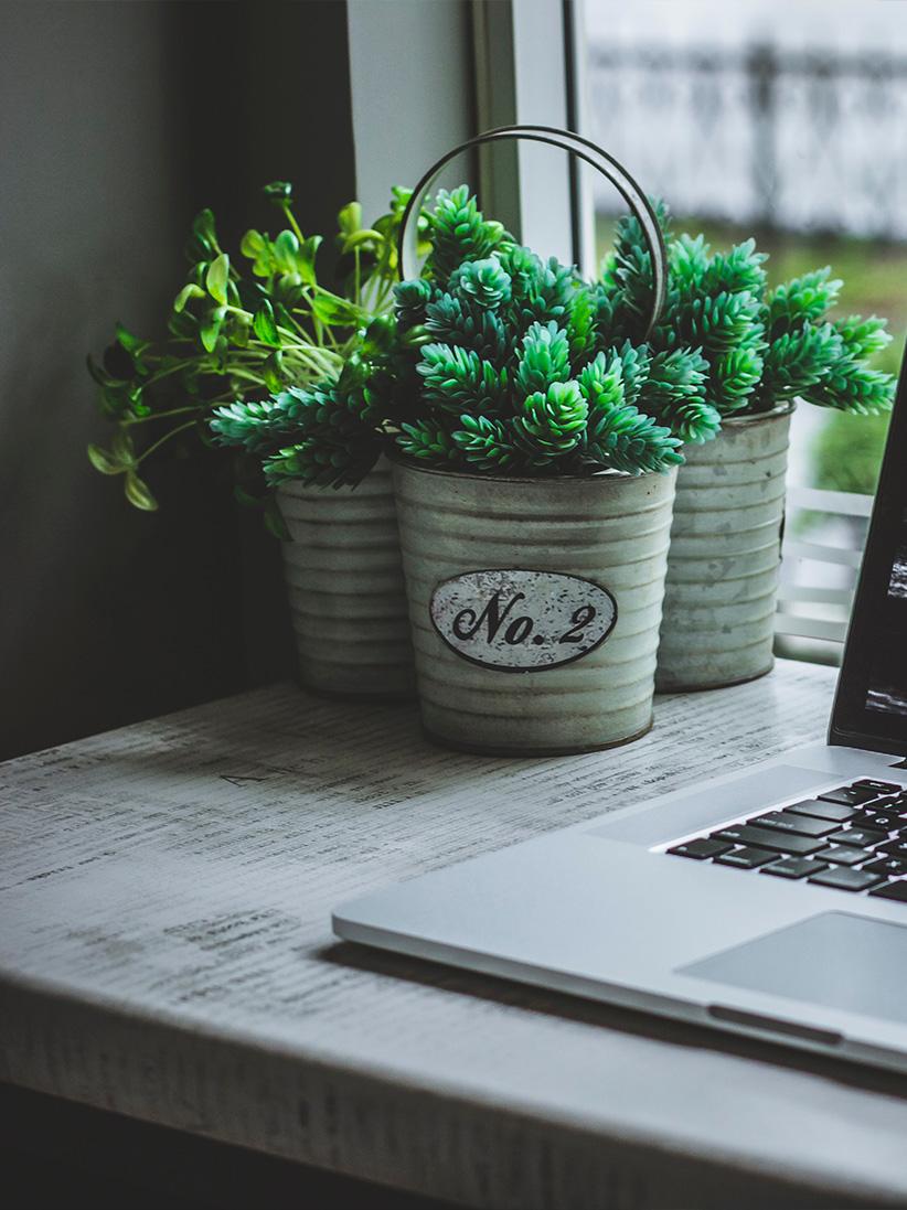 ordinateur-et-pots-de-fleurs-pour-Digital4all-agence-digitale-et-web-authentique-proche-des-pme-et-des-tpe